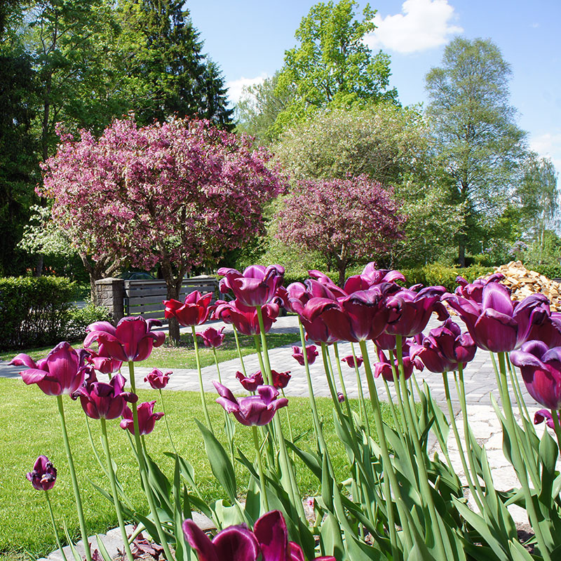 Teie Aednik aiakujundus